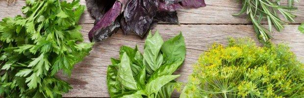 ¿Qué hierbas van bien con qué alimentos?